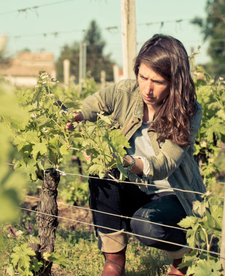 Château Pindefleurs - Terroir - contre bourgeon vigne